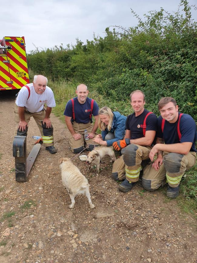 Firefighters with the rescued Jack Russells and their owner