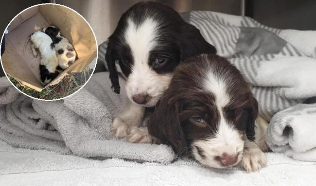Two puppies who were found dumped in cardboard box on roadside have died