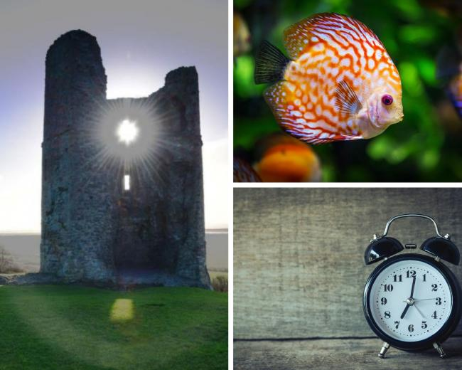 The top five things to do in Southend this Sunday as clocks go back.