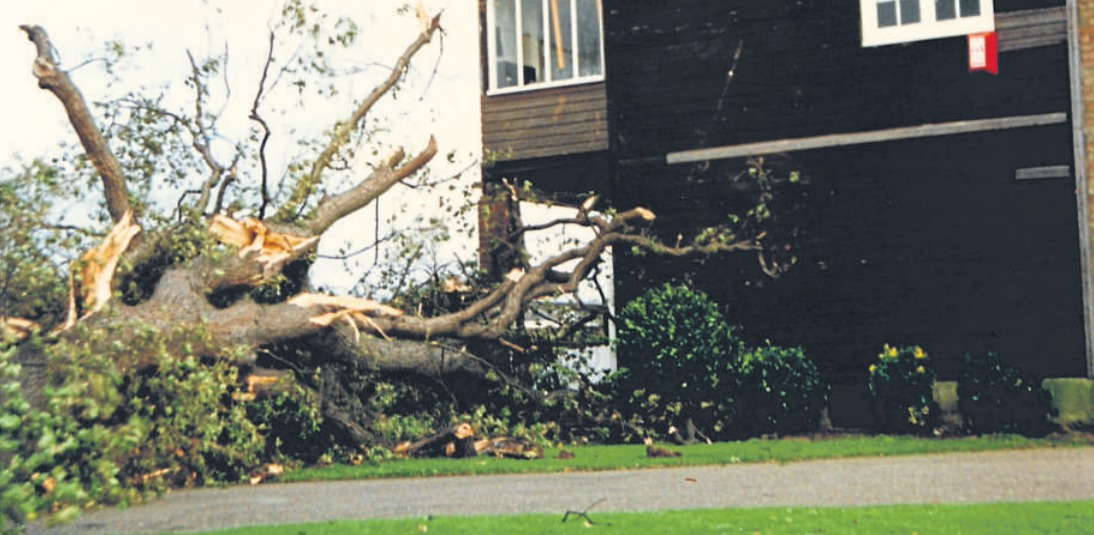Ripped from the earth - Simon Bishop saw countless trees uprooted in Chalkwell Park