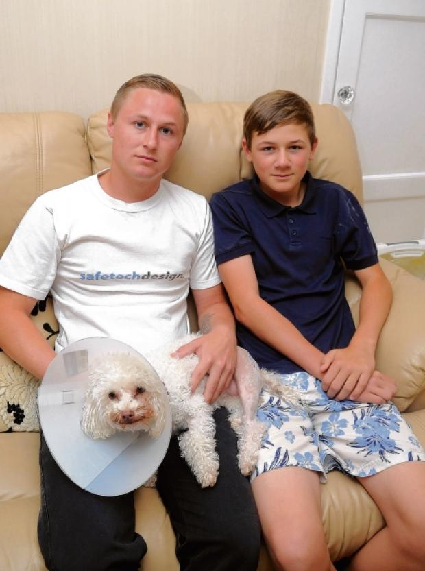 Lewis, 21, and Harley Clatworthy, 12, with injured Izzy, who was left in the road after being hit by a car
