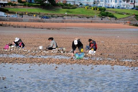 Oyster picking – but groups like this, at Southend, are causing concern