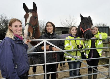 Staff at the Essex Horse and Pony Protection Society have been busier than ever