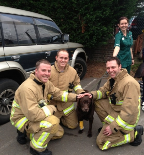 Firefighter Ben Manning, sub officer Karl Smith and firefighter Wayne Davey, of White Watch, Leigh, with a dog rescued from Medivet in Eastwood (Picture from Essex Fire and Rescue Service)