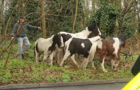 The horses in Nevendon Road