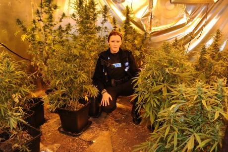 Burglary call leads cops to cannabis factory find