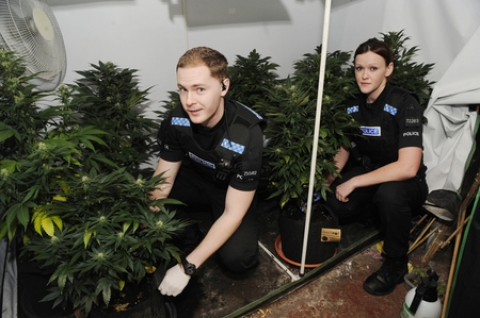 Pc Chris Hoy and Pc Clara Hurrell-Smith with the haul of cannabis found at a Billericay home