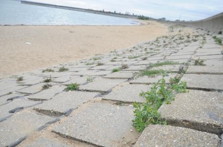 Police to target dog fouling on Canvey seafront