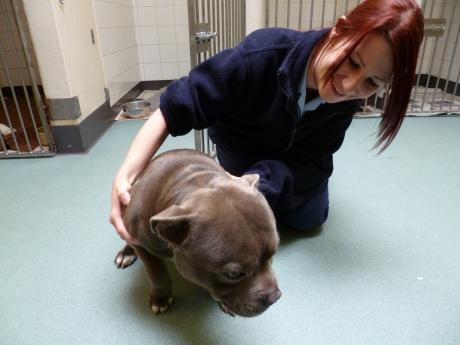 Recovering - Boss with kennel nurse Hayley Conyard