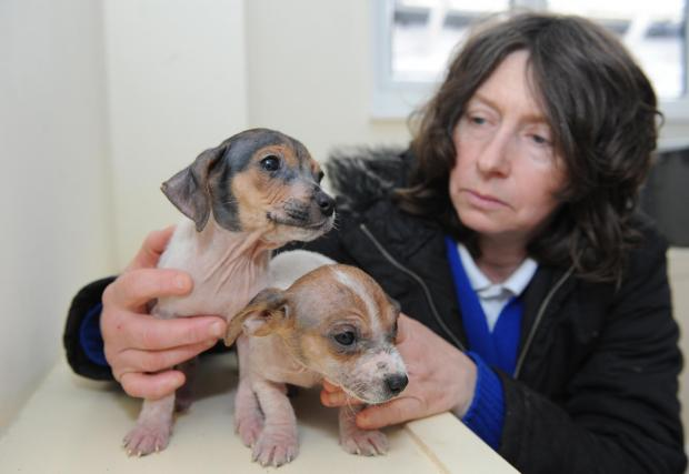 Pups desperate for a new home after being dumped in a freezing alleyway