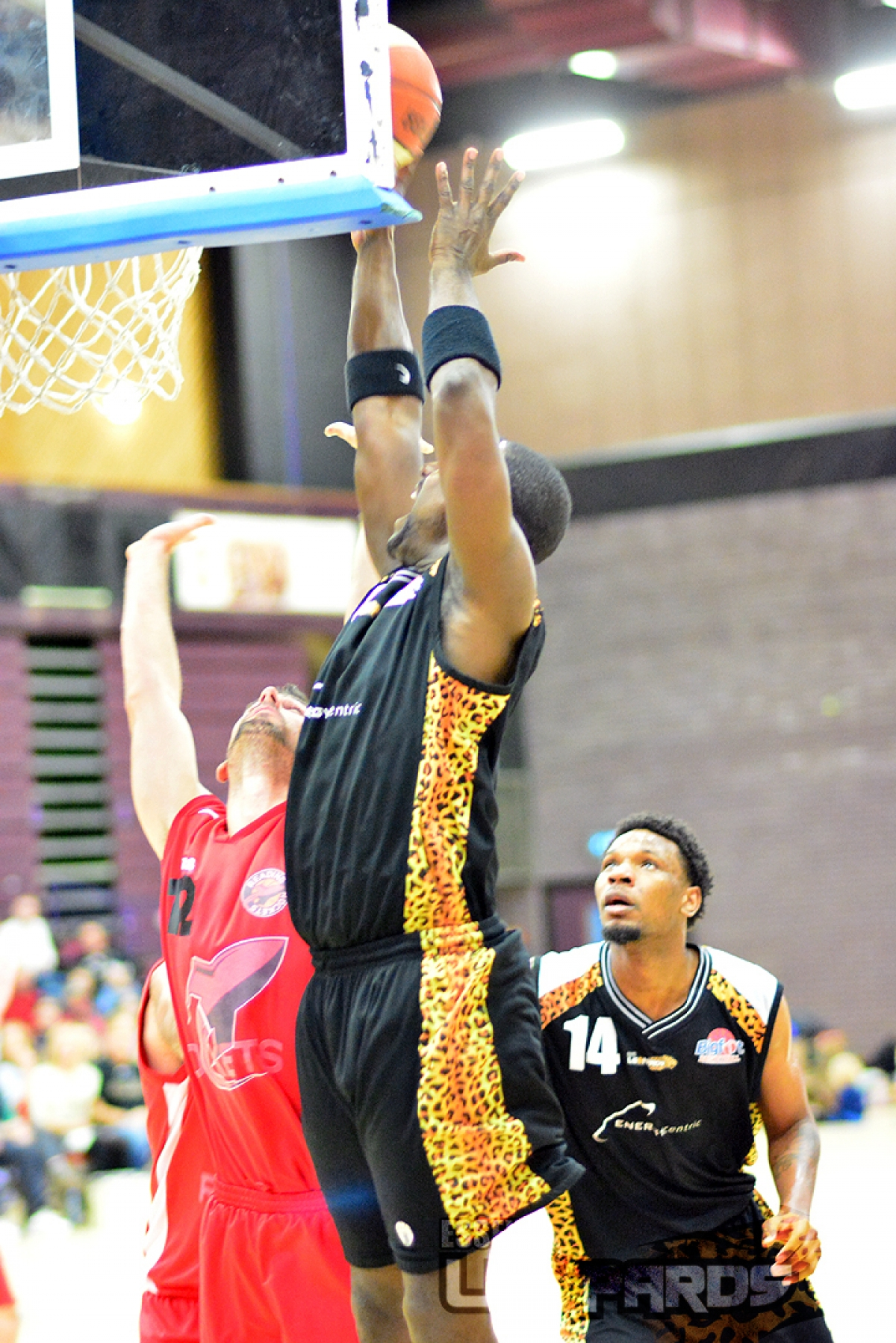 Robert Youngblood still fancies Essex Leopards for the title