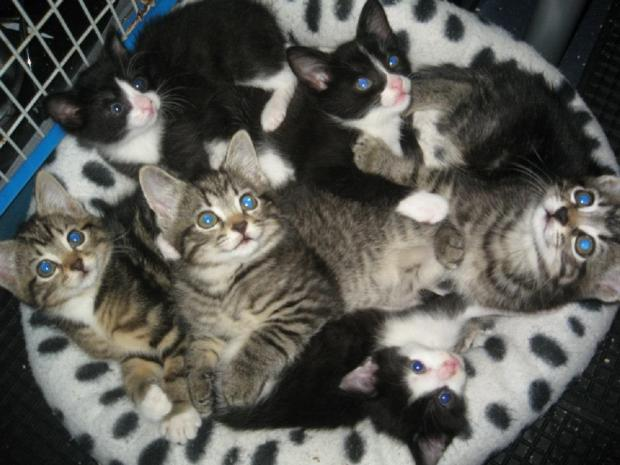 Echo: Kittens – in need of a home