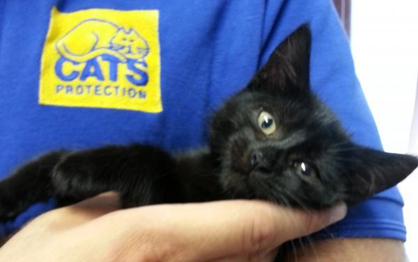 Kitten dumped in box in Laindon street needs a home