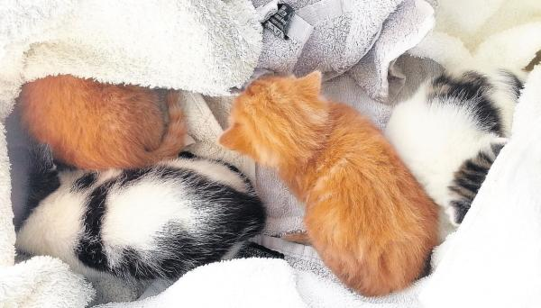 Can you help find homes for abandoned kittens?