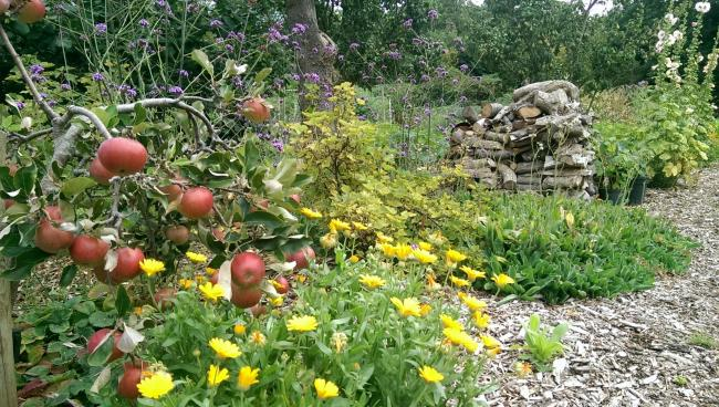 Want to stay healthy? Spend time on an allotment, say Essex University researchers
