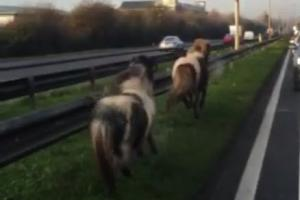 UPDATED: A127 closed at Noak Bridge due to escaped ponies