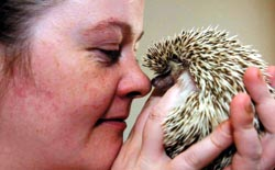 Michelle Fountain with her pygmy hedgehog Nadua