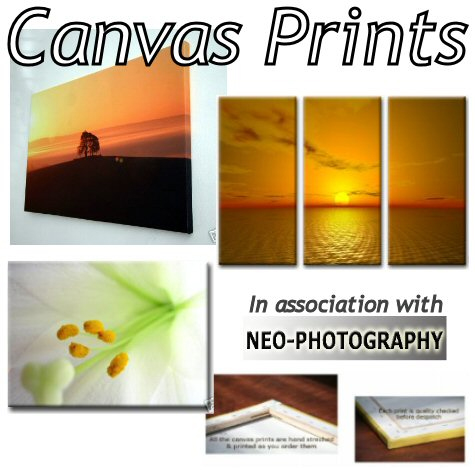 Echo: Canvas Prints
