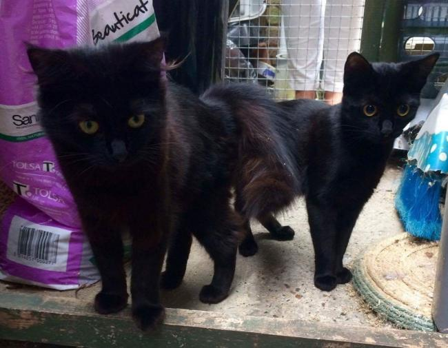 Rescued - Prada and Coco are now being cared for
