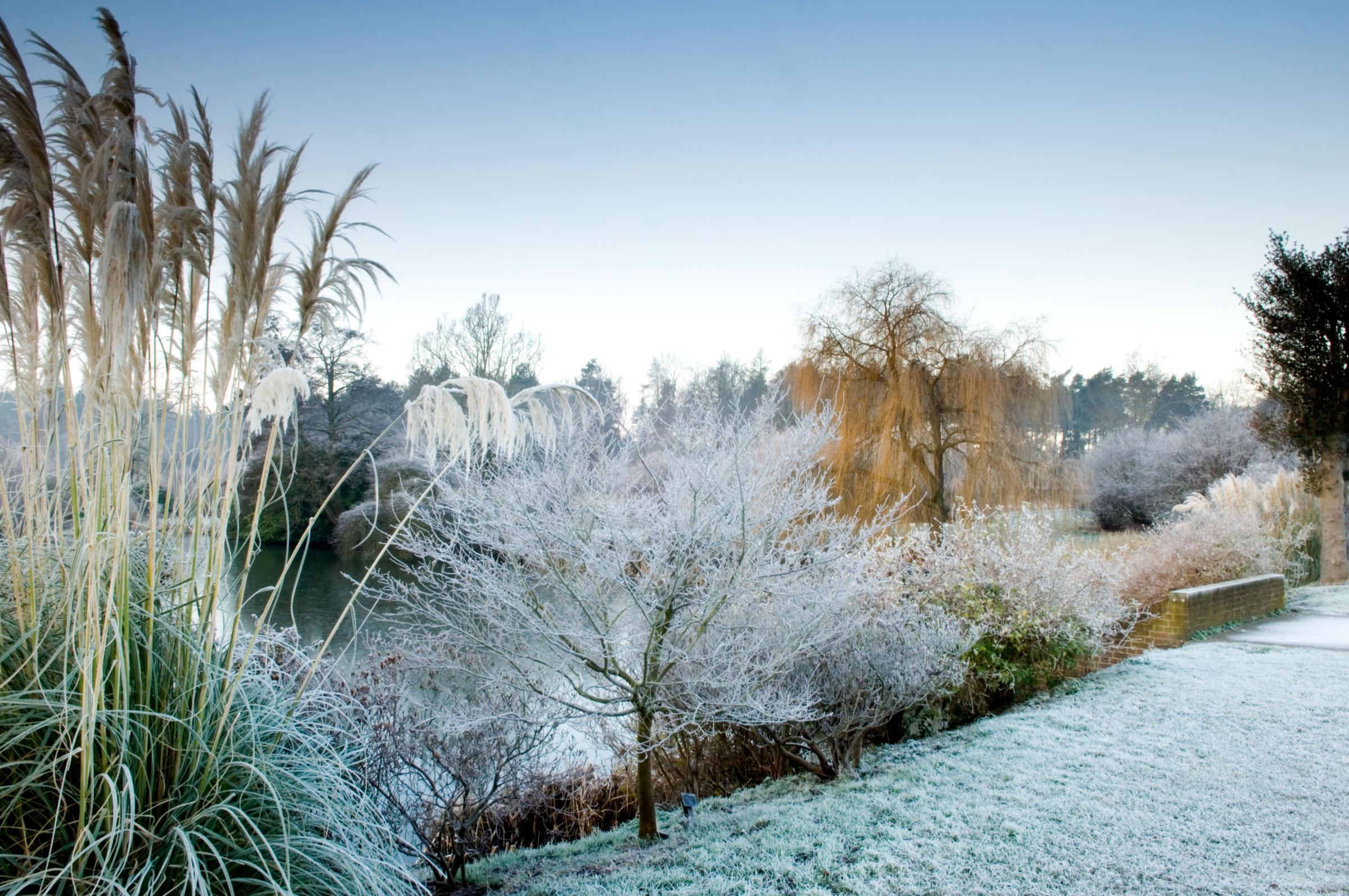 marks226.December . Winter frost . landscape garden . .Owners: The Thomas Phillips Price Trust.Marks Hall Estate, Coggeshall.UK.Jerry Harpur.December, Winter, frost, landscape, garden, Marks Hall Estate, Coggeshall, UK, Jerry Harpur, ....