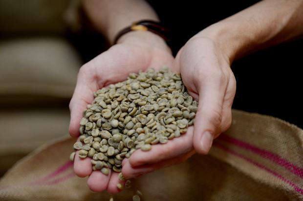 Echo: The Coffee Officina Ltd, Unit G, Housham Hall Farm, Matching Tye. The Coffee Officina is a small workshop and laboratory where Marcella Fiori and Rory Lloyd experiment and find the best coffee to roast, brew and supply. They hand roast small batches of se