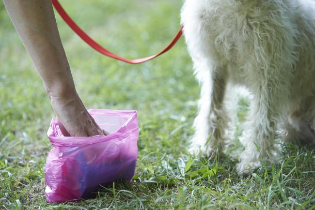 Plan to use DNA technology to catch irresponsible dog owners who don't pick up poo