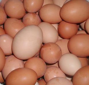 Echo: Shopkeepers ban youngsters from buying eggs