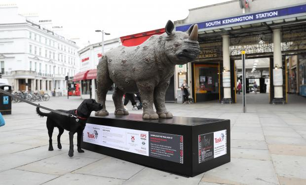 Echo: Undated Handout Photo of a rhino sculpture designed by Nancy Fouts. See PA Feature TOPICAL Travel Rhino Trail. Picture credit should read: PA Photo/Tim Whitby/Getty. WARNING: This picture must only be used to accompany PA Feature TOPICAL Travel Rhino Trai